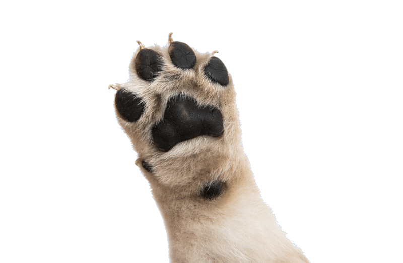 dog paw in the air