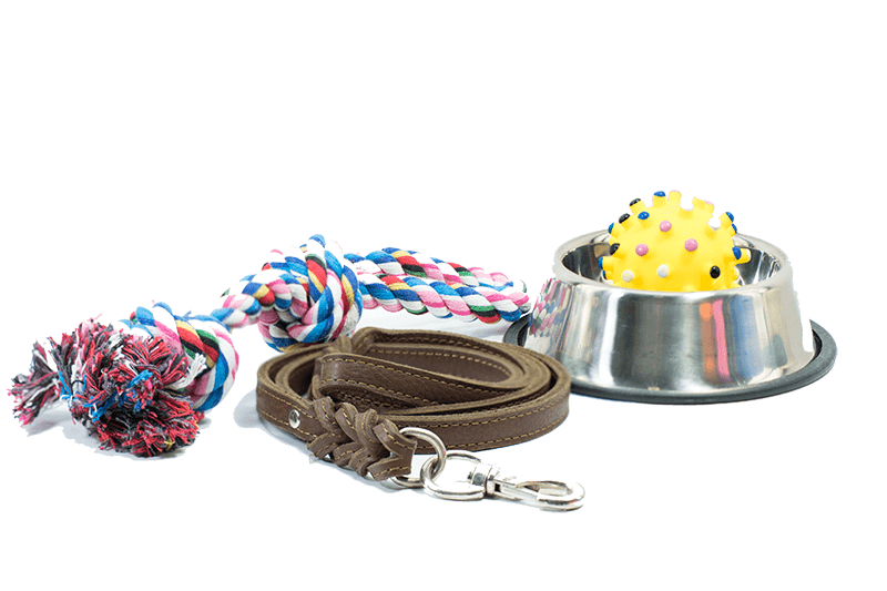 pet accessories on a floor